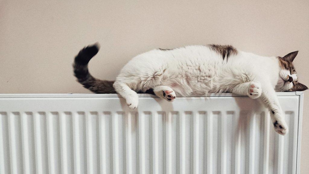 Kat op verwarming