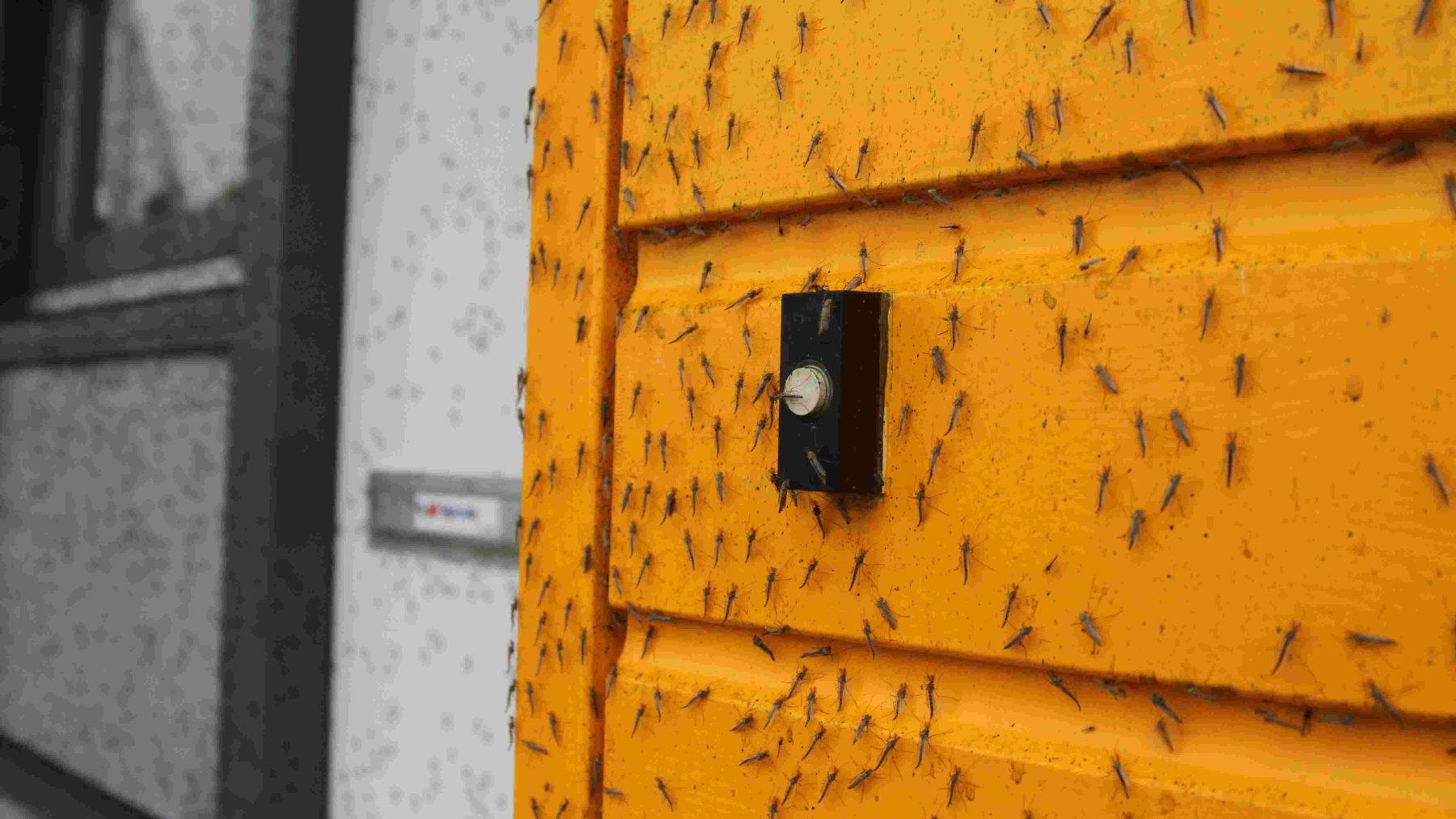 Vliegenplaag in seniorencomplex Hulst terroriseert bewoners