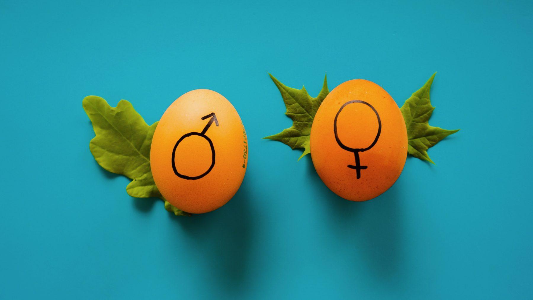 vrouw-anders-huisarts-dan-man-onderzoek-ballering-plug