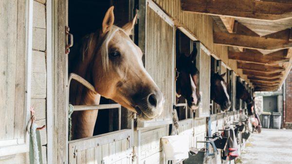 paard-in-de-gang