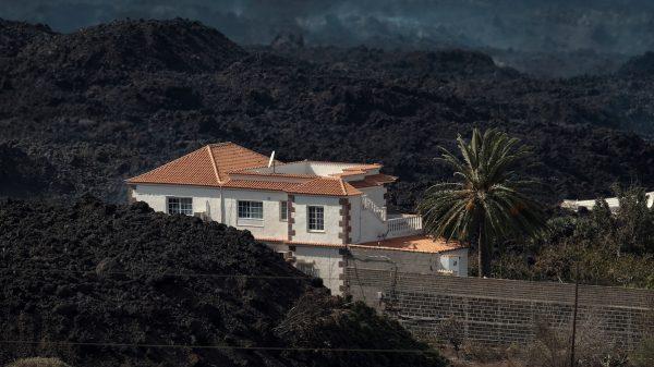 Eerste beelden opgedoken van geredde honden La Palma