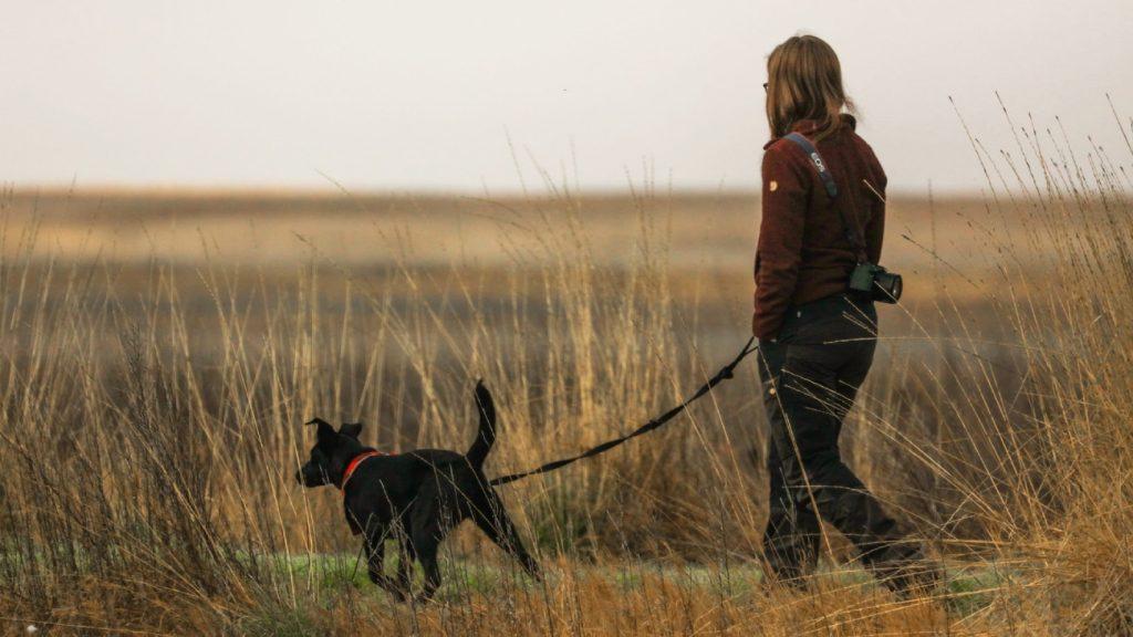 Grote hond valt wandelende vrouw aan, baasje loopt door