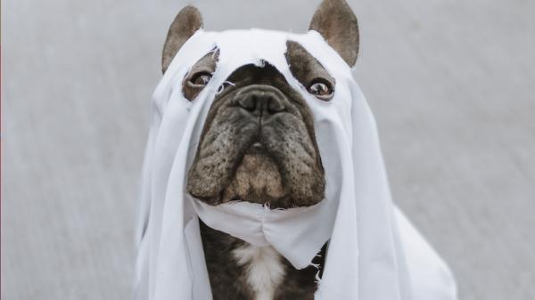 horror Films Halloween op tv Unsplash